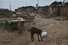 An Afghan refugee boy runs to help a goat with its head stuck in a bowl of water