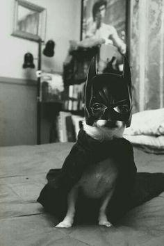 I am BatChi