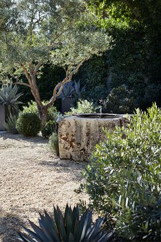 Design Ed-Scott Shrader Garden Design - New ideas Garden Landscape Design, Garden Landscaping, Landscaping Design, Patio Design, Mediterranean Garden Design, Dry Garden, Pea Gravel Garden, Home And Garden Store, Exterior