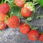 From farm to fork: June -                        A combination of wet weather and persistent pests have provided some challenges this month – challenges that many are unaware of when they buy their produce.  #Health #Food #Farming