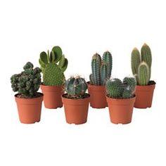 Grünpflanzen und Übertöpfe im persönlichen Stil beleben die Einrichtung.