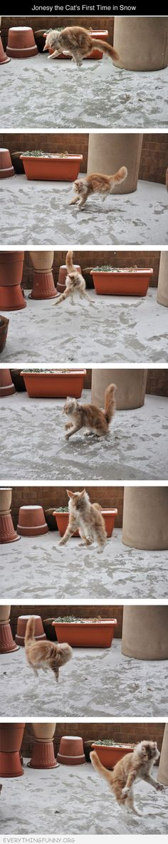 Looks like this kitty enjoyed its first snow.