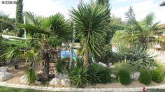 Yucca aloifolia et ses nouvelles pousses octobre 2010 Yucca, Living Spaces, Landscaping, Swimming, Deco, Architecture, Plants, Inspiration, Garden