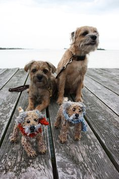Fionas Wonderful Border Bears - Border Joy - For Border Terriers & Their People Patterdale Terrier, Cairn Terriers, Terrier Dogs, Border Terrier, Little Puppies, Little Dogs, Cute Funny Animals, Funny Animal Pictures, Baby Dogs