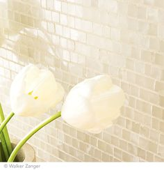 White Mist Taj Mosaic White. Could be a warmer choice for backsplash.