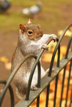1608 best p a nutz about squirrels images adorable animals