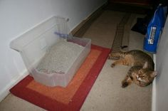 Clever home made litter box for kitties who need better aim.