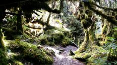Moss forest Singgalang the most beautyfull.