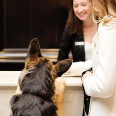 Looking for dog-centric room service? Dog walking and sitting services? Pup-friendly attractions in the area? There's something for everyone on our list of top dog-friendly hotels around the country. Dog Friendly Hotels, Pet Friendly Accommodation, All About Animals, Animals And Pets, Travel Ideas, Travel Inspiration, Animal Experiences, European Travel Tips, Hiking Dogs