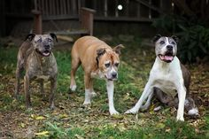 Gabby, far left, Duval, center, and Sunny, far right, became the best of friends in their later years. Duval and Sunny were adopted as seniors, and both dogs thrived in their new, loving homes. Their stories are shared in the book <i>My Old Dog: Rescued Pets with Remarkable Second Acts</i>.