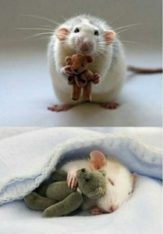 For anyone feeling a bit sad, here's a picture from a woman who makes Teddy Bears for her pet mouse pic.twitter.com/3uqG3bB0Ts