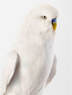 Photographer Captures Personality of Birds Through Portraits - My Modern Metropolis