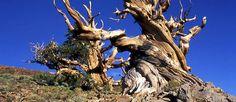 http://mundodeviagens.com/arvores/ - O poder da natureza é tal que por vezes nos surpreende com boas de beleza gigantesca. Foi por isso mesmo que escrevemos este post (que vale mais pela imagem do que pelo texto em si) onde mostramos 10 árvores espalhadas pelo Mundo que se destacam pela sua beleza e por parecerem tão fora do normal.