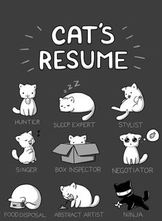 Cat Resume. Follow me at http://www.pinterest.com/cattreehouse/