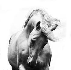 """Онлайн психолог домашних питомцев. Online pet psychologist https://www.facebook.com/animal.psychology Психолог онлайн. """"Психология личного пространства"""" http://psychologieshomo.ru Horse Heaven"""