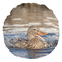Mallard Duck at Downing Park Round Pillow - home gifts ideas decor special unique custom individual customized individualized