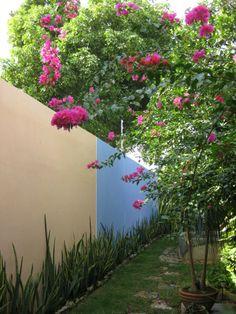 Merida back yard #merida #mexico