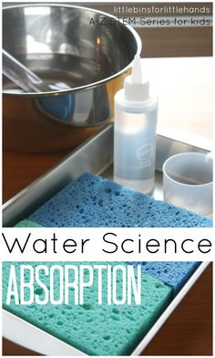 Absorption Science Water Experiment for Kids