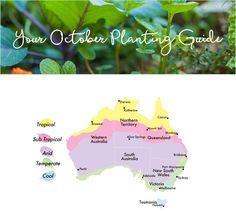 edible-planting-guide-october-australia