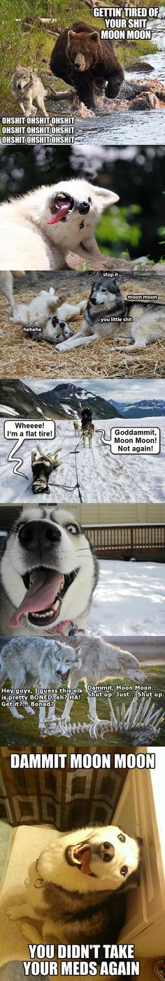 The return of Moon Moon - Funny Dog Quotes - The return of Moon Moon Funny Dog Quotes funny-derp-wolf-moon-moon-meme The post The return of Moon Moon appeared first on Gag Dad. The post The return of Moon Moon appeared first on Gag Dad. Husky Humor, Funny Husky Meme, Dog Quotes Funny, Funny Dogs, Funny Puppies, Animal Jokes, Funny Animal Memes, Funny Animal Pictures, Cute Funny Animals