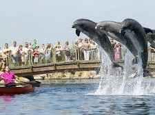 Dolfinarium Harderwijk - Google Search Grandkids, Holland, Whale, Boat, Google, Animals, The Nederlands, Whales, Dinghy