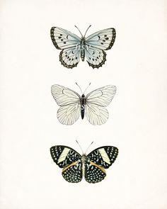 Butterfly sketch, butterfly wall art, vintage butterfly, white butterfly, s Butterfly Sketch, Butterfly Name Tattoo, Butterfly Wall Art, Butterfly Tattoo Designs, White Butterfly, Vintage Flower Tattoo, Vintage Flowers, Tattoo Vintage, Nature Illustration