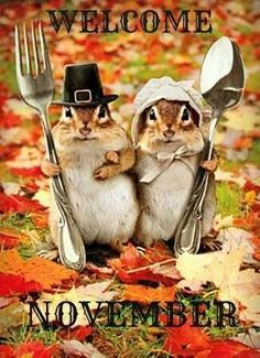 Happy Thanksgiving to everyone :) They just reminded me of your creative mind. : ) The story of the chipmunks' thanksgiving. Chipmunks, Animal Pictures, Cute Pictures, Gif Pictures, Wedding Pictures, Beautiful Pictures, Tierischer Humor, Funny Animals, Cute Animals