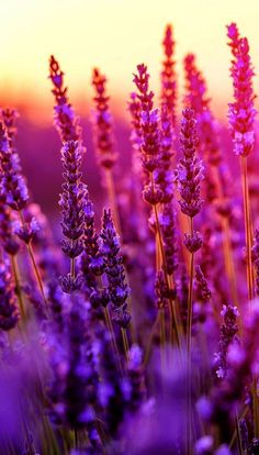 ideas for colorful nature photography flowers fields Purple Flowers Wallpaper, Spring Wallpaper, Holiday Wallpaper, Beautiful Flowers Wallpapers, Flower Phone Wallpaper, Iphone 6 Wallpaper, Beautiful Nature Wallpaper, Pretty Wallpapers, Galaxy Wallpaper