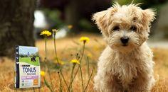 """Da Garden Zanet potete trovare """"Purina Tonus Dog Chow Small Breed"""": alimento completo per cani di piccola taglia, sia cuccioli che adulti. Tonus favorisce il loro benessere, la curiosità attiva e il loro contagioso entusiasmo per la vita. Con prebiotico naturale che contribuisce a migliorare il benessere digestivo. Tonus 100% nutrizione completa e bilanciata sviluppata per ogni fase della vita del nostro amico a quattro zampe. #cane #petfood #amicoa4zampe"""