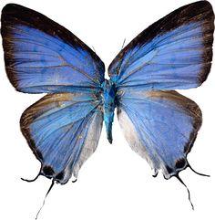 Sisters' Warehouse: Farfalle - Butterflies...