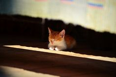 I alwas want to sleep :)   Flickr - Photo Sharing!