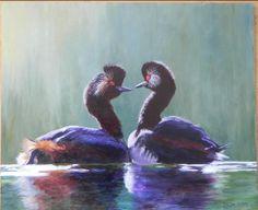 Twee geoorde futen (black-necked grebe)