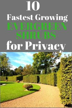 Check out this list of some of the fastest growing hedge plants you can get your hands on! You'll have a living privacy fence in no time! Some of these plants grow up to 3 feet a year