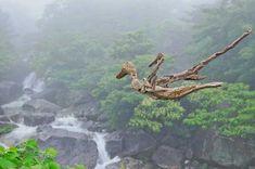#流木の鳥ー12 ★ 「流木の鳥達よ   渡り鳥となって地球上を羽ばたき、駆け巡り、人々に自然からのメッセージを届けてくれ!」 ★  #流木 #流木アート #屋久島アート #インテリア #Birds of #driftwood #Interior