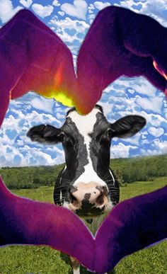 Why do cows deserve to be killed, when they could've gave milk, and raise more gallons of milk?
