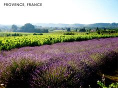 Provence is the largest wine region specializing in Rosé. They have a lovely climate - lots of sunshine and not too much rain - which makes Provence very suitable for growing a variety of grapes.