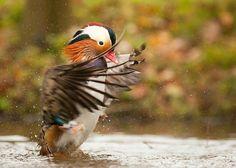 Фото животные и птицы.. Обсуждение на LiveInternet - Российский Сервис Онлайн-Дневников