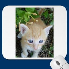 Mousepad of the cute kitty by catphoto