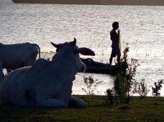 Tapajós River -- Santarém