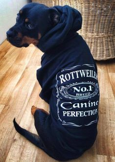 Rottie, I want a sweatshirt just like that for my Rottie.