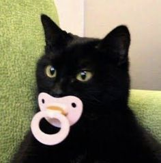 I Love Cats, Cute Cats, Black Cat Aesthetic, Neon Symbol, Cute Little Animals, Cute Creatures, Cat Memes, Funny Cute, Animals And Pets