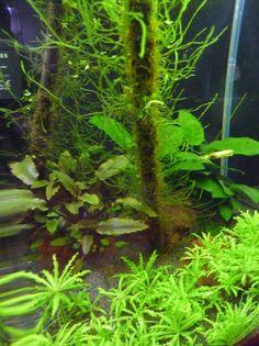 Nano aquarium : le pour et le contre http://www.pariscotejardin.fr/2015/01/nano-aquarium-le-pour-et-le-contre/