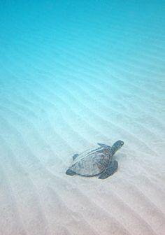 Snorkeling Hawaii's Big Island.