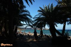 Crete: The palm forest of Vai and the wind of Kouremenos | Camperistas.com