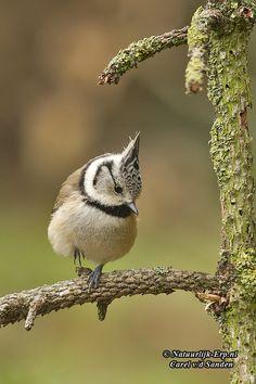Beautiful Photos Of Nature, Nature Photos, Beautiful Birds, Animals Beautiful, Baby Animals, Funny Animals, Cute Animals, Little Birds, Love Birds