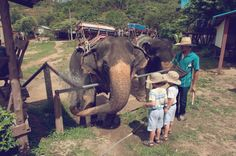 Elephant Rides in Thailand by @HamiltonCreek  | Two Bright Lights :: Blog