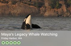 https://www.tripadvisor.com/Attraction_Review-g60957-d669774-Reviews-Maya_s_Legacy_Whale_Watching-Friday_Harbor_San_Juan_Island_San_Juan_Islands_Washing.html?m=19904
