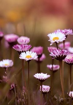 Nature flowers plants floral 62 ideas for 2019 Flowers Nature, My Flower, Wild Flowers, Beautiful Flowers, Bohemian Flowers, Belle Photo, Mother Nature, Planting Flowers, Bloom