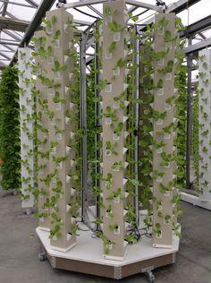 AERO Pod growing 608 plants with 10 foot columns.