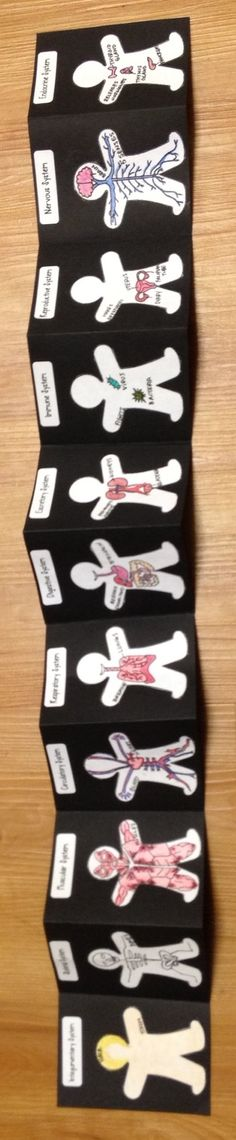 Actual Project Grade 6-8 Life Science Anatomy Human Body Organ Systems Foldable    1. Skeletal System (Bones) 2. Integumentary System (Hair & Skin) 3. Muscular System 4. Circulatory System 5. Respiratory System 6. Digestive System 7. Excretory System 8. Immune System 9. Reproductive System 10. Nervous System 11. Endocrine System